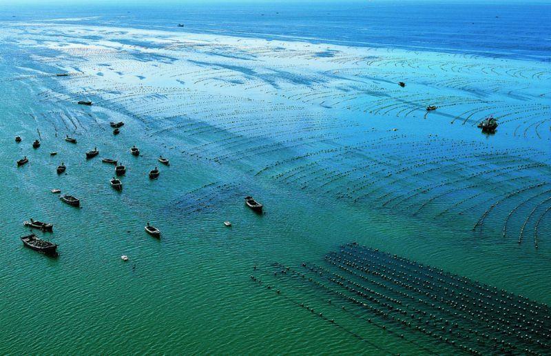 海洋牧场凭鱼跃